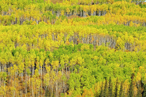 Wall Art - Photograph - Canada, Alberta, Grande Prairie by Jaynes Gallery