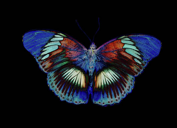Insect Photograph - Colorful Butterfly Design Against Black by Darrell Gulin