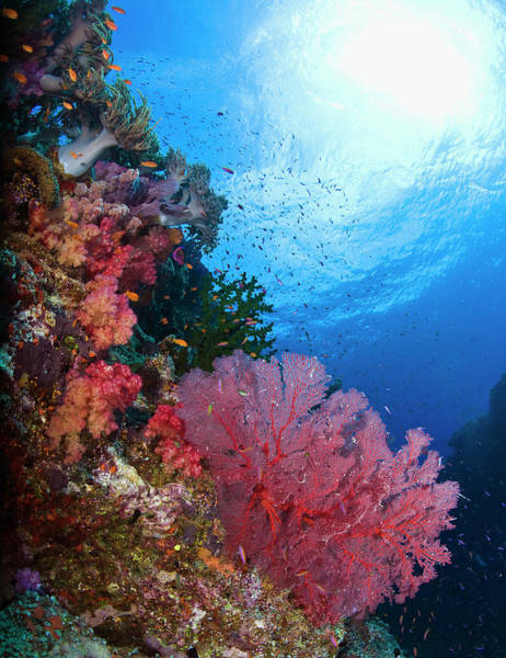 Coral Photograph - Colorful Soft Corals On Undersea Reef by Na Gen Imaging