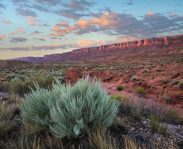 Photograph - Desert And Cliffs, Vermilion Cliffs Nm by