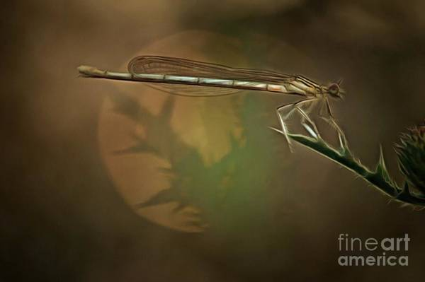Wall Art - Digital Art - Dragonfly On Leaf by Michal Boubin