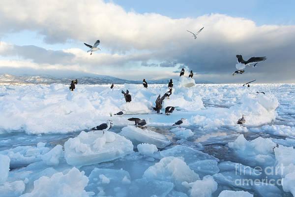 Drift Photograph - Drift Ice In Shiretoko, Hokkaido, Japan by Zincreative