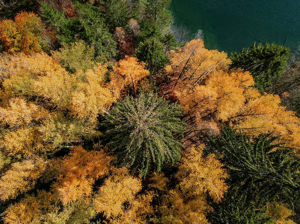 Wall Art - Photograph - Drone Shot Bird S Eye View Mixed Forest With Yellow Leaves In Autumn From Above Lake Barmsee by imageBROKER - Moritz Wolf