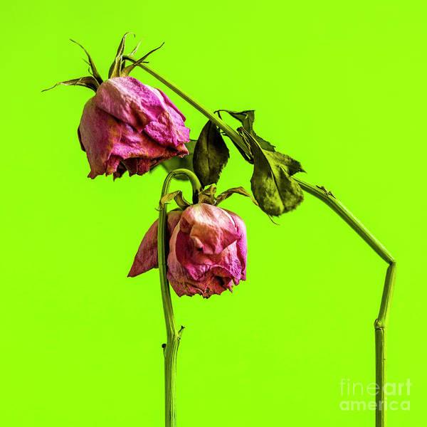 Wall Art - Photograph - Dying Flower Against A Green Background by Bernard Jaubert