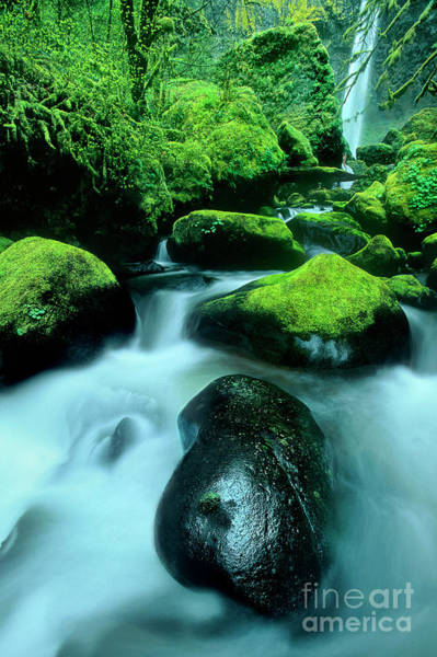 Photograph - Elowah Falls Columbia River Gorge National Scenic Area Oregon by Dave Welling