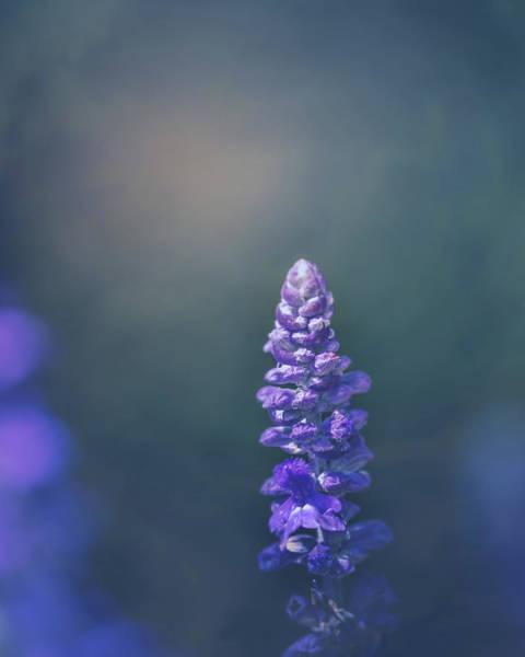 Photograph - Evening Light by Allin Sorenson