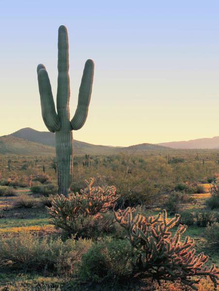 Maricopa Photograph - Evening Peace by Gordon Beck