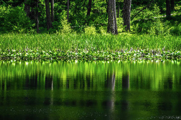 Photograph - Evergreen Forest Reflecting In Lake by Alex Grichenko