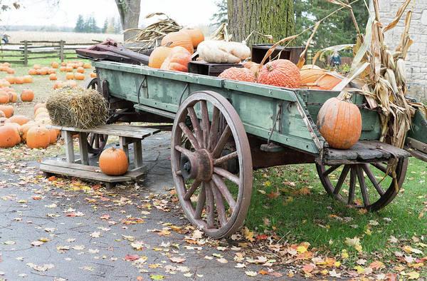 Photograph - Fall Display by Nick Mares