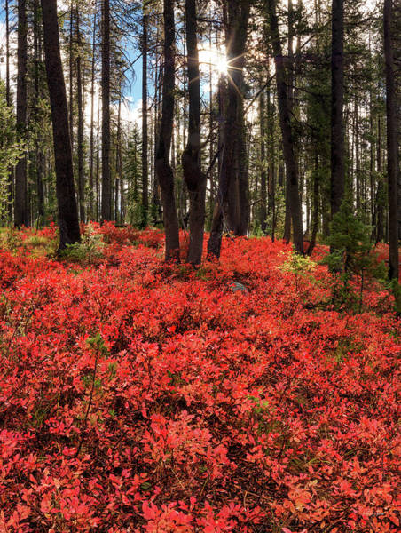 Excellent Wall Art - Photograph - Forest Of Red by Leland D Howard