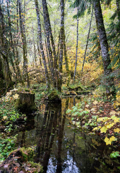 Photograph - Forest Reflections by Steven Clark