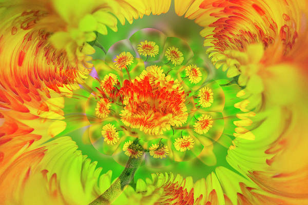 Wall Art - Photograph - Gerber Daisy Abstract by Adam Jones