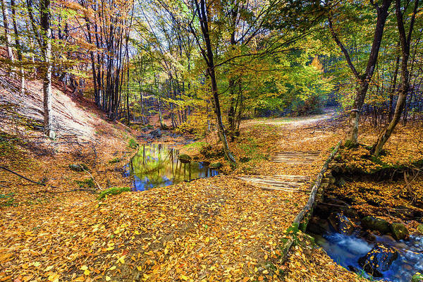 Wall Art - Photograph - Golden River by Evgeni Dinev
