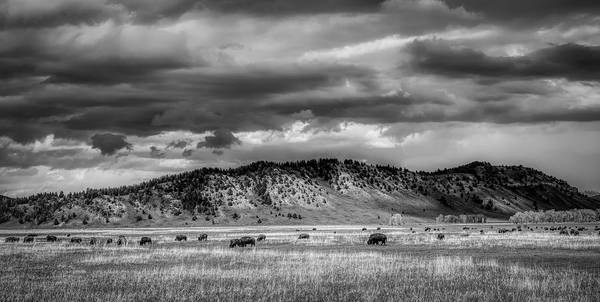 Wall Art - Photograph - Grazing Bison by Mountain Dreams