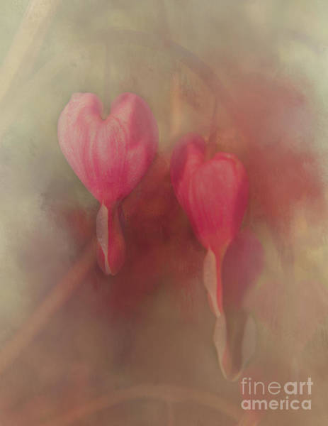 Photograph - 2 Hearts by Pam  Holdsworth