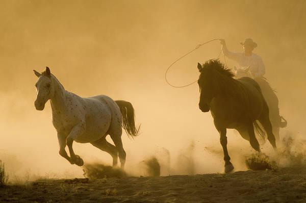 Ranch Hand Photograph - Horses by Garyalvis