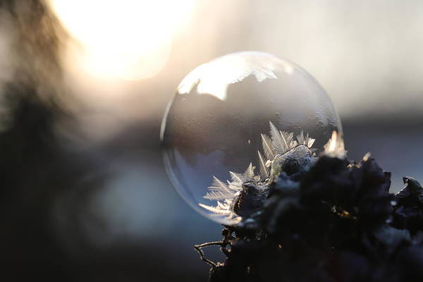 Wall Art - Photograph - Ice Crystals by Heike Hultsch