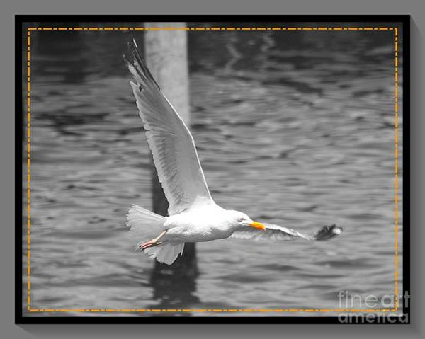 Wall Art - Photograph - In Flight by Stacey Brooks