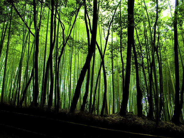 Wall Art - Photograph - In The Bamboo Grove by Marser
