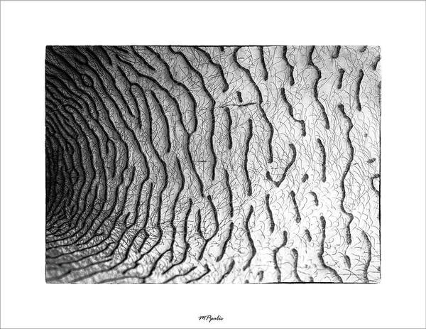 Wall Art - Photograph - Inner Flower Abstract Details by Michalakis Ppalis