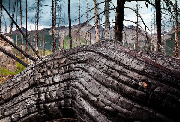 Material Photograph - Jasper National Park, Alberta, Canada by Mint Images/ Art Wolfe
