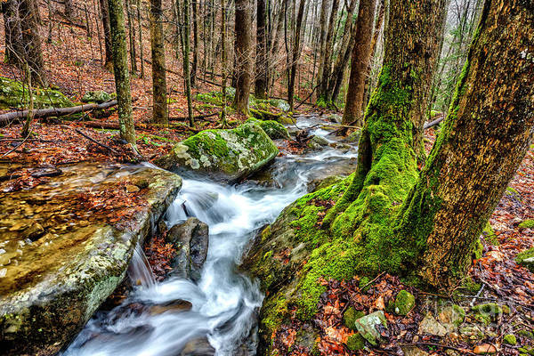 Photograph - Little Laurel Branch Waterfall by Thomas R Fletcher