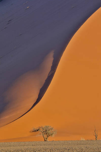 Wall Art - Photograph - Lone Tree And Tall Sand Dune by Darrell Gulin