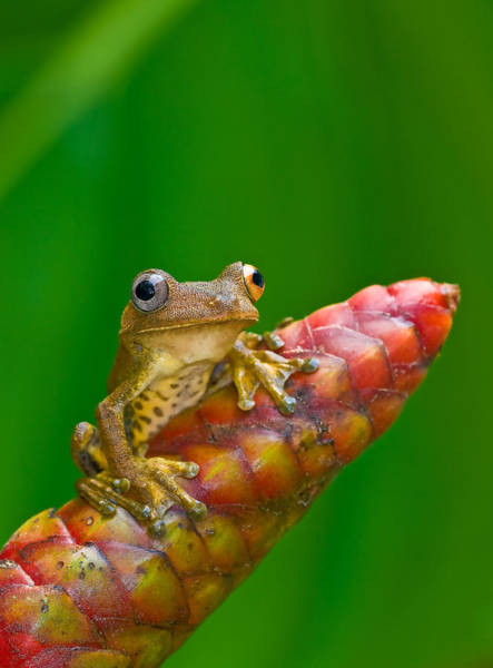 Wall Art - Photograph - Map Treefrog by Michael Lustbader