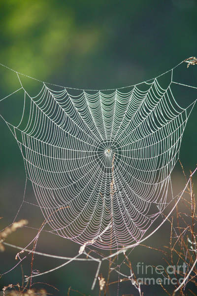 Wall Art - Photograph - Marsh Spider Web by Carol Groenen