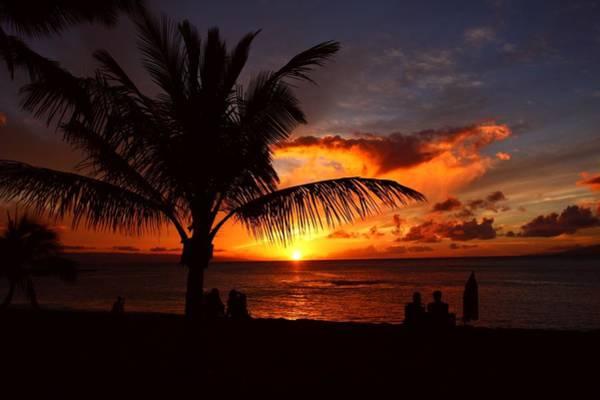 Kapalua Photograph - Maui Hawaii Pacific Ocean Palm Tree by Ejs9