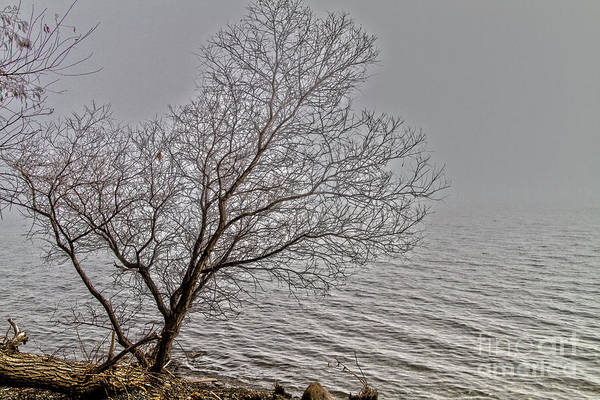 Wall Art - Photograph - Morning Fog by William Norton