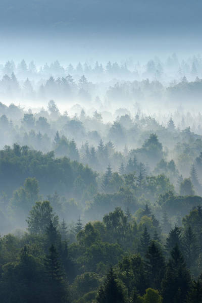 Bleached Photograph - Morning Mist In Forest, Isar Valley by Martin Ruegner