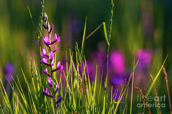 Photograph - Mountain Wildflowers by Steve Krull