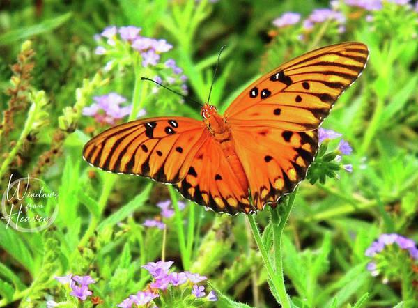 Photograph - Orange Butterfly  by Matthew Seufer