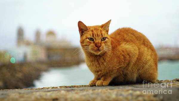 Photograph - Orange Cat By The Sea by Pablo Avanzini