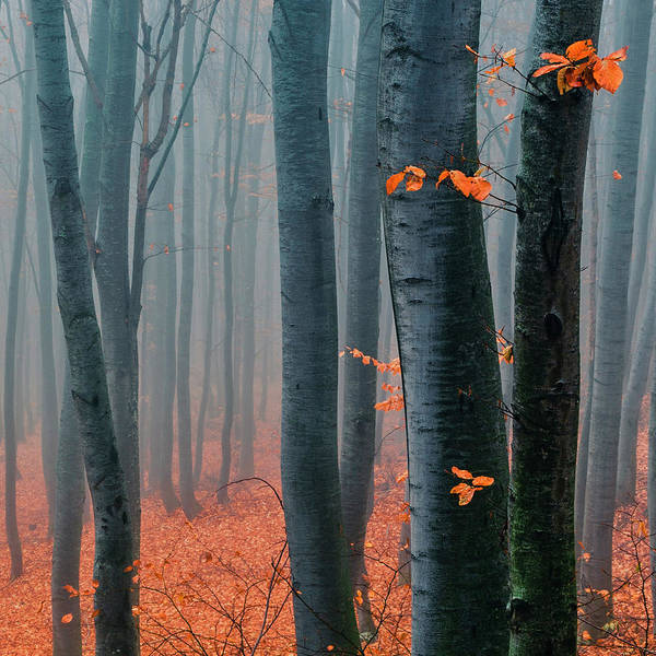Photograph - Orange Wood by Evgeni Dinev