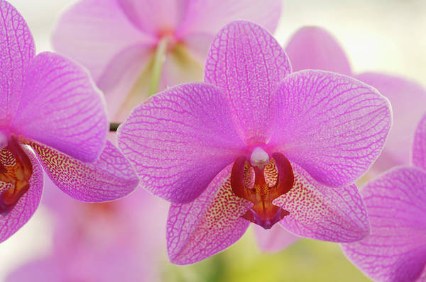 Wall Art - Photograph - Orchid Phalaenopsis Spec. Close Up by Martin Ruegner