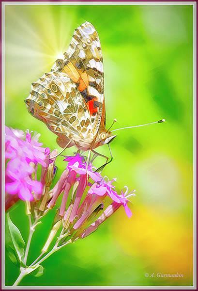 Digital Art - Painted Lady Butterfly On Deptford Pink Flowers by A Gurmankin