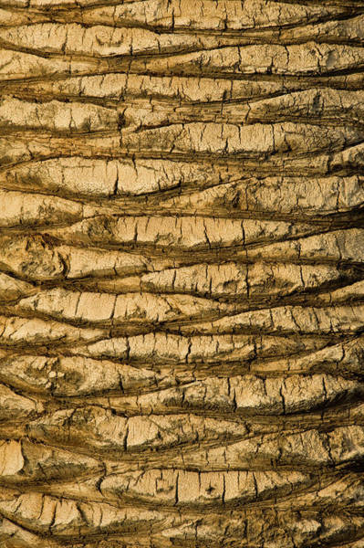 Toughness Photograph - Palm Tree Trunk Close-up by Brian Stablyk