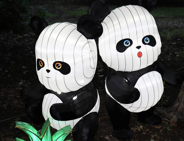 Photograph - 2 Pandas by Ron Roberts