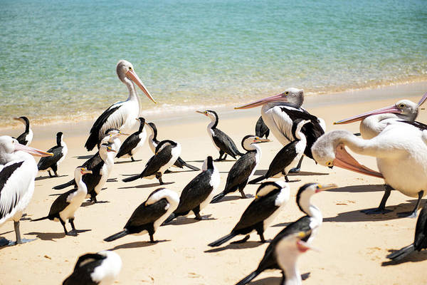 Photograph - Pelicans During The Day by Rob D Imagery