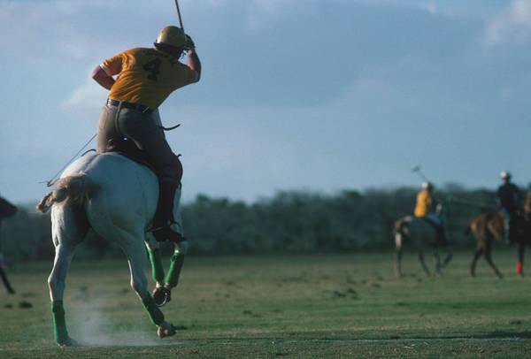 Horse Photograph - Polo Match by Slim Aarons
