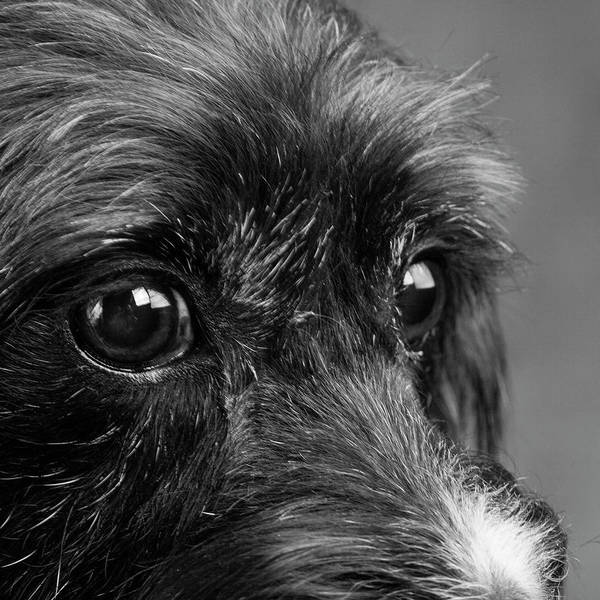 Wall Art - Photograph - Portrait Of A Terrier Mix Dog by Panoramic Images