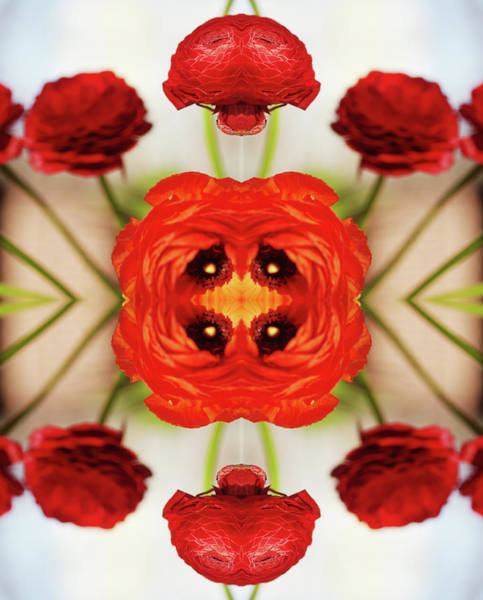 Experiment Wall Art - Photograph - Ranunculus Flower by Silvia Otte