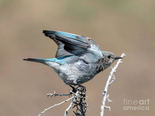 Wall Art - Photograph - Ready To Fly by Mike Dawson