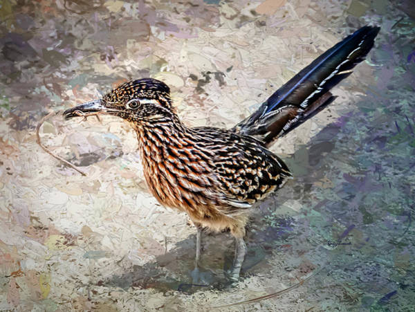 Photograph - Roadrunner Making Nest by Penny Lisowski