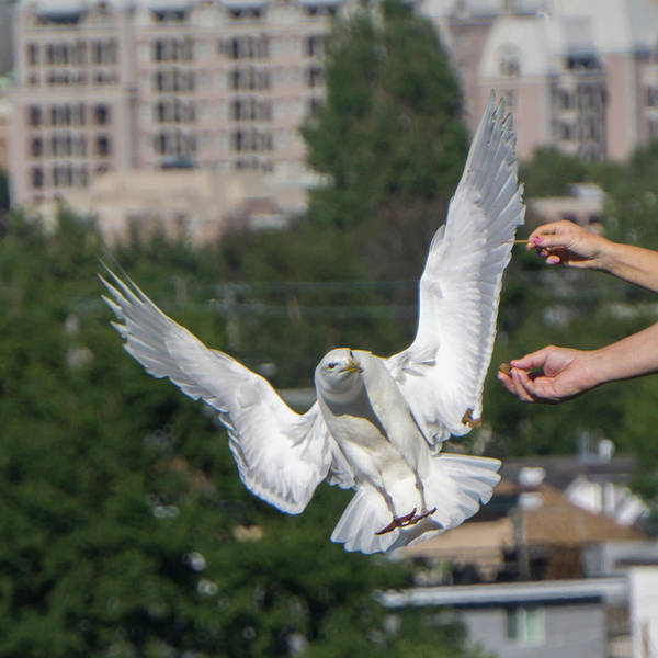 Photograph - Seagull Stealing Food From Peoples Hands On Ship by Alex Grichenko