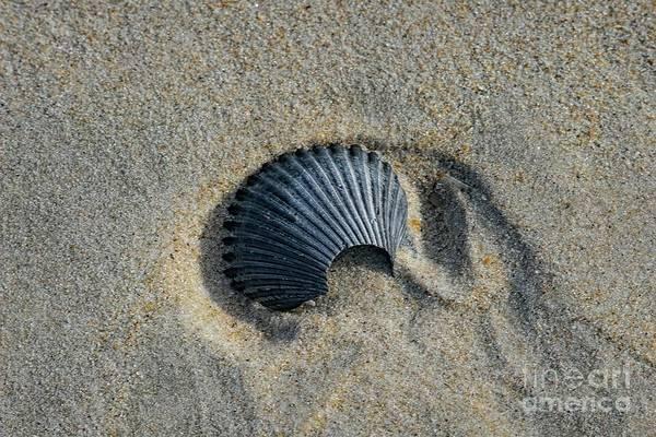 Photograph - Shell by Elijah Knight