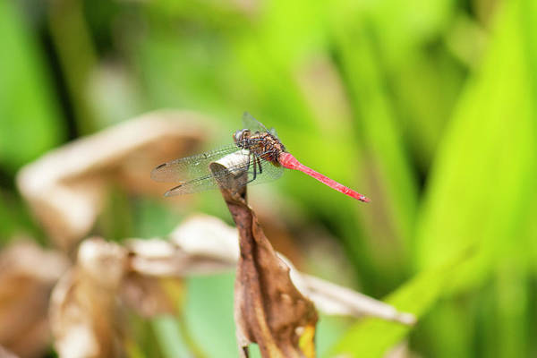 Photograph - Small Beautiful Dragonfly by Rob D Imagery