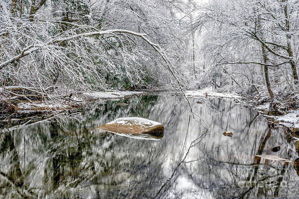 Photograph - Snow Along Cranberry River by Thomas R Fletcher